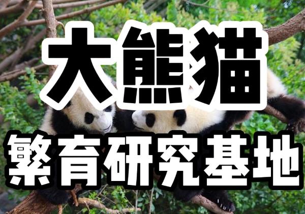 大熊猫繁育研究基地