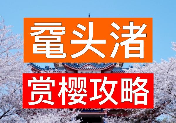 太湖鼋头渚风景区赏樱攻略